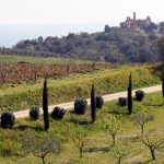 Olivträd o cypresser